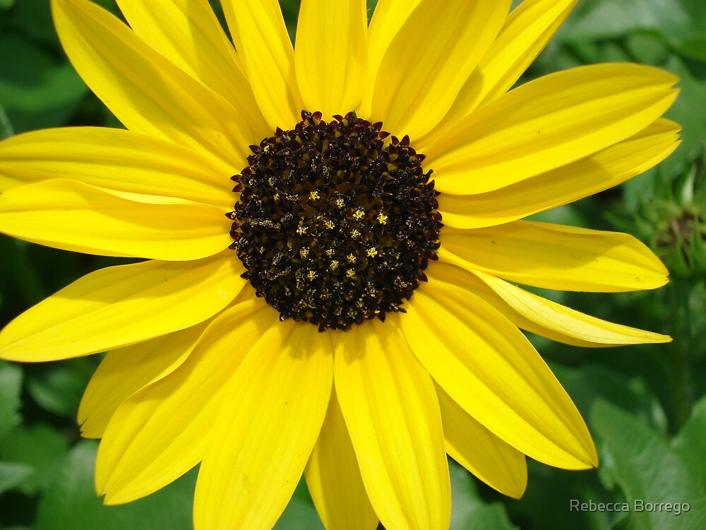 A Piece of Sunshine in Your Hands by Rebecca Borrego