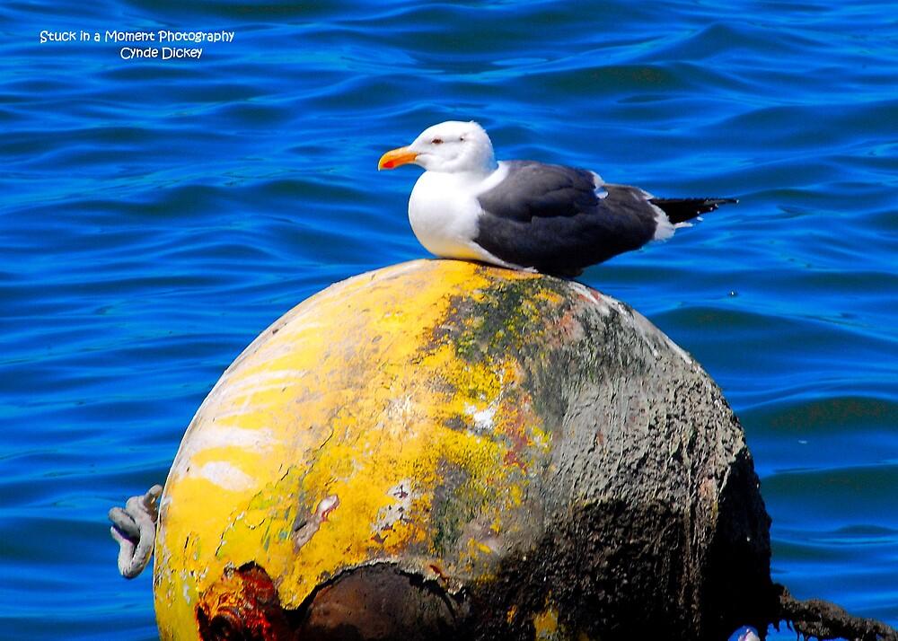 Bird on a Bouy by Cynde143