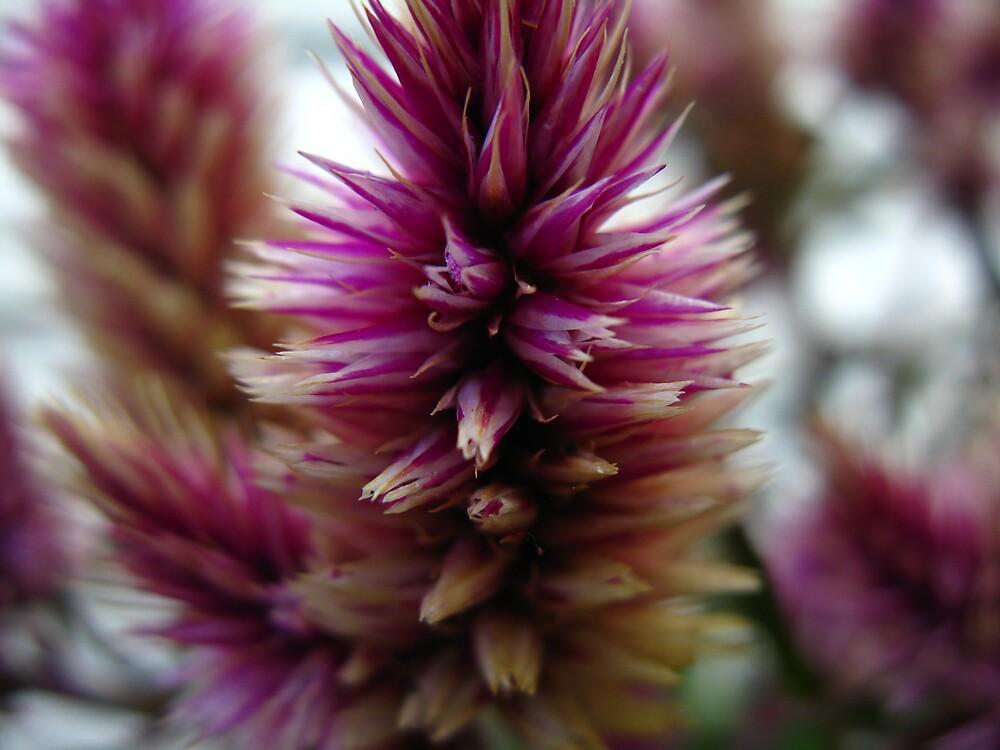 Purple is in by LirpasDreamer