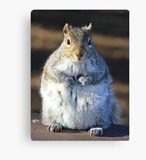 I'm not fat I'm insulating for the winter Canvas Print