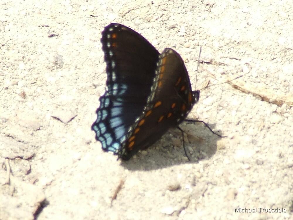 Butterfly 2 by Michael Truesdale