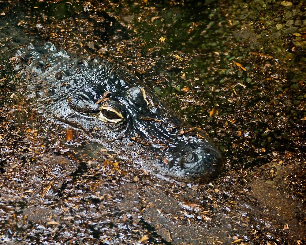 Alligator Eyes by StephenCoyle