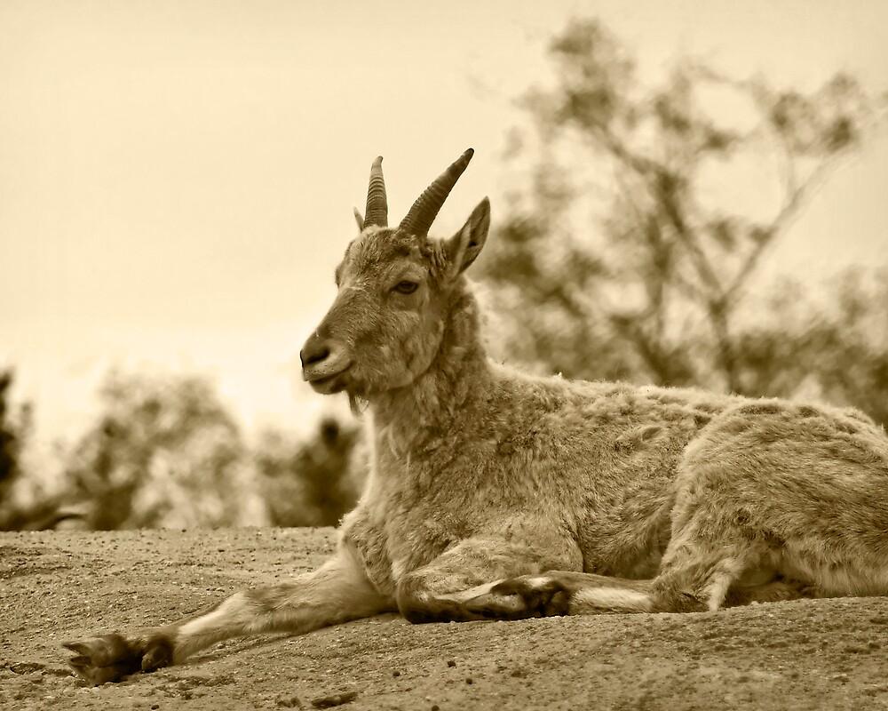 Bronzed Goat by StephenCoyle
