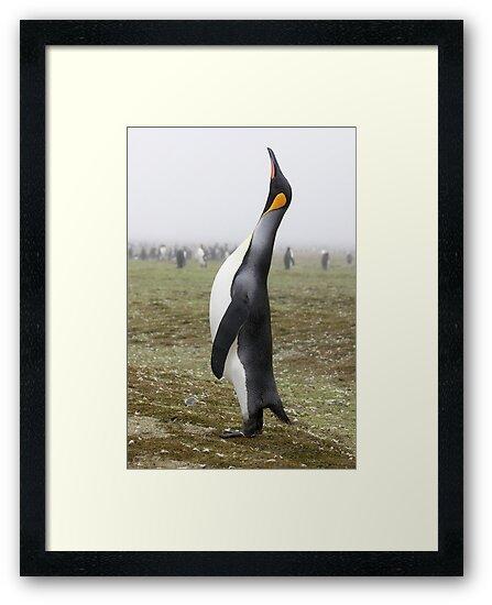 """King Penguin ~ """"The Trumpeter"""" by Robert Elliott"""