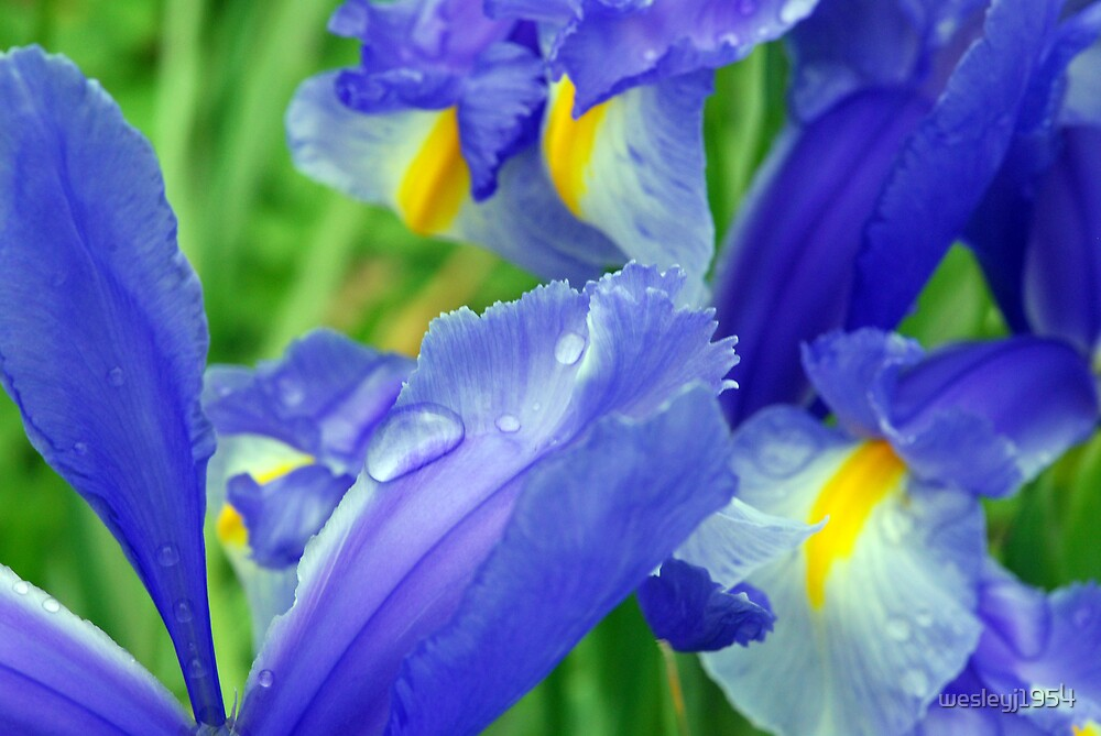 Flowers after the rain by wesleyj1954