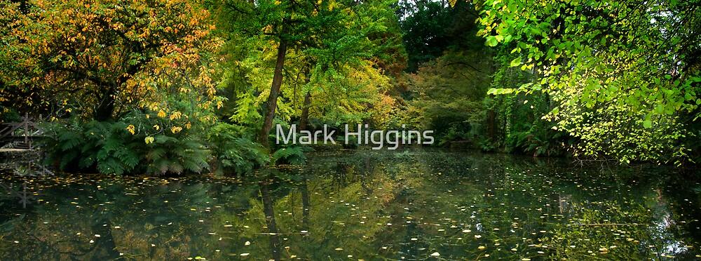 Burnham Beeches by Mark Higgins