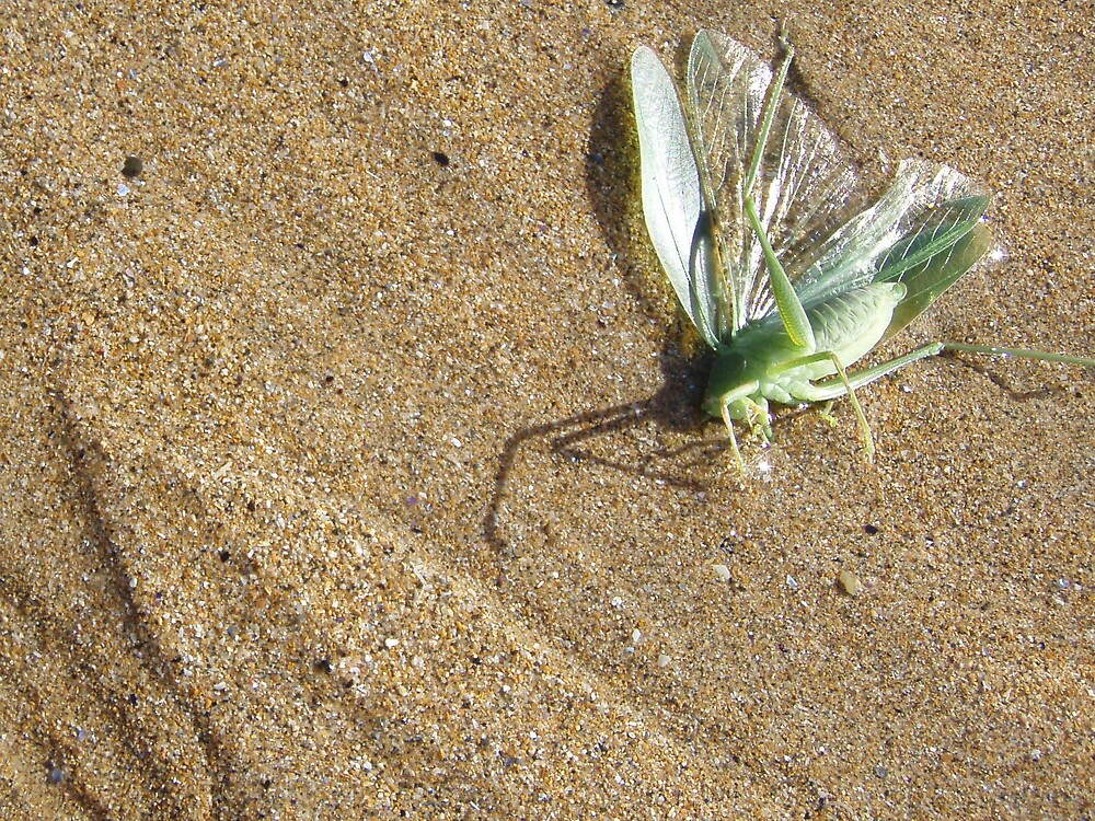 Poor little BUGger !!     -  moist sand trapped insect by gaylene
