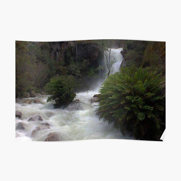 Ladies Bath Falls, Eurobin Creek Poster
