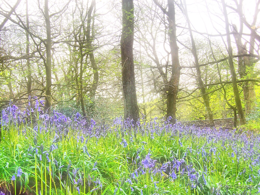 Bluebell Wood by spottydog06