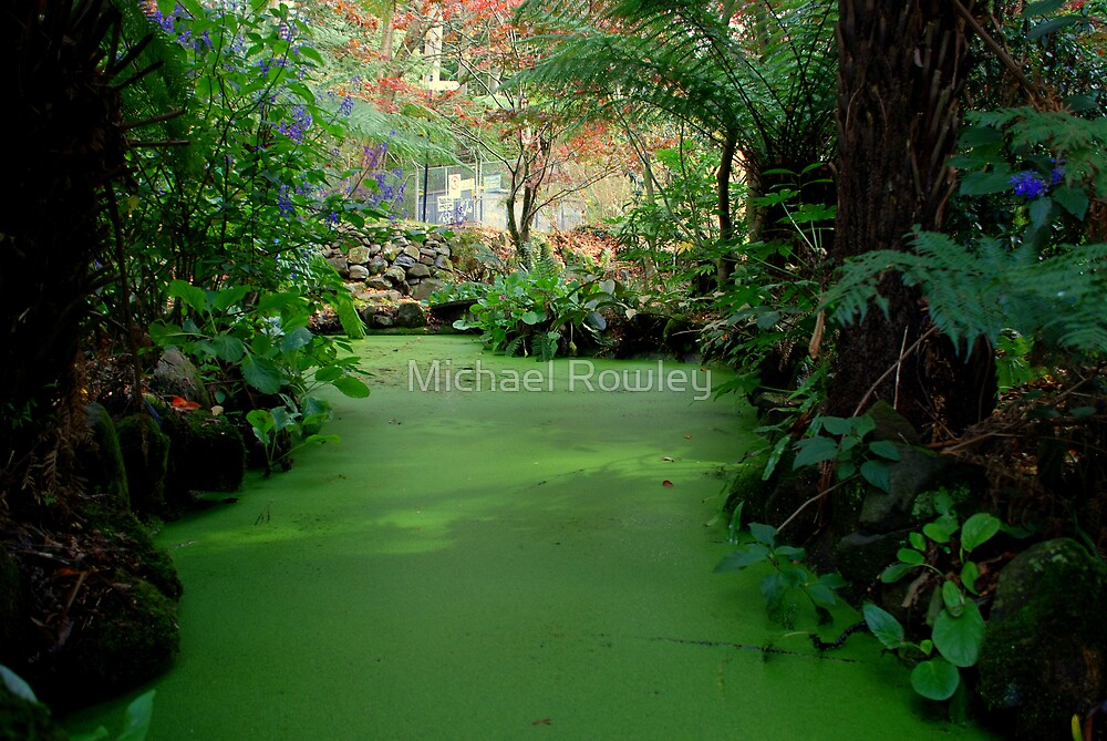 Moss Pond by Michael Rowley