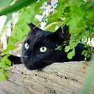 Green eyes among green ferns by Penny Kittel