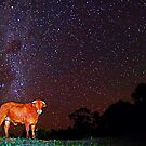 Star cow by Penny Kittel