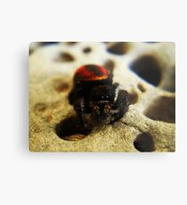 Spidey-Man Metal Print