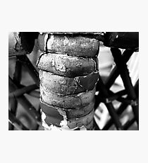 Wicker Spine Photographic Print