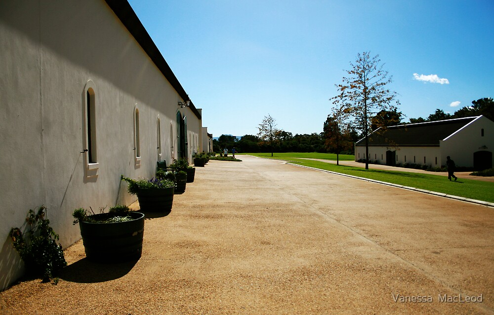 Perspective on L'Ormarins Wine Estate by Vanessa  MacLeod