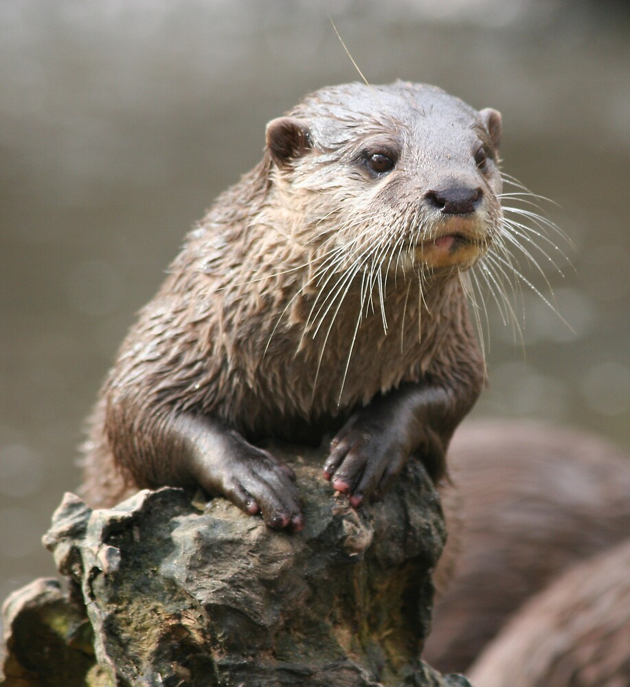 Otto the Otter by wingsyves