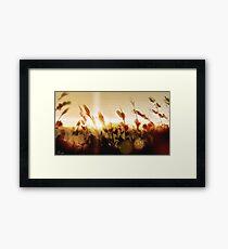 Golden Sun 2 Framed Print