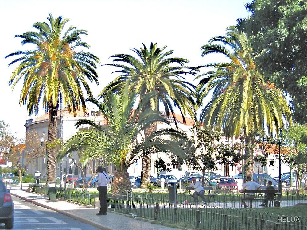 Streetscape with Palmes by HELUA