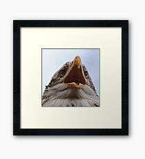 Bald-eagle Framed Print