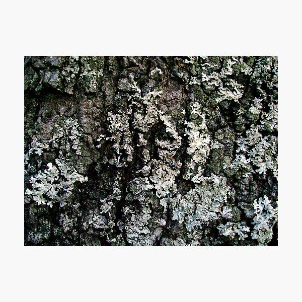 Environmental Abstract Photographic Print