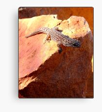 Just Warming my Back  Canvas Print