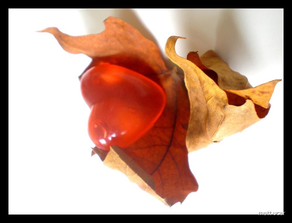 autumn heart by matt ucar