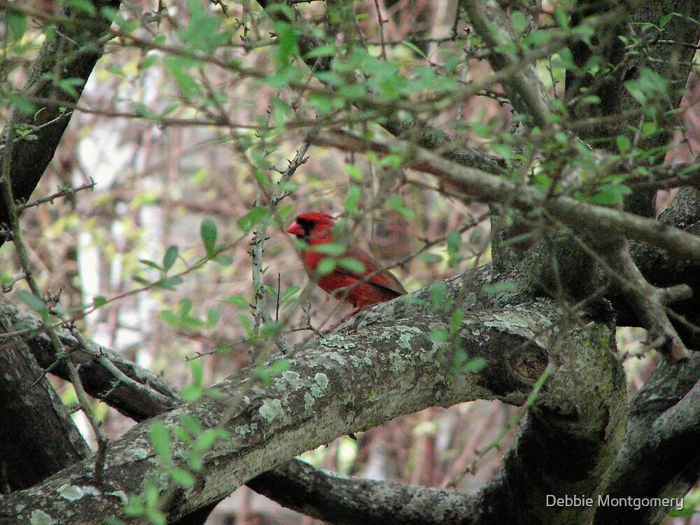 male cardinal by Debbie Montgomery