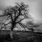Spooky Tree by Ken Fleming