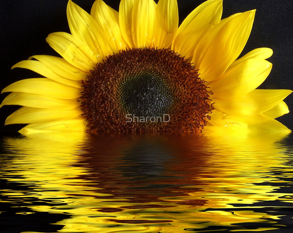 Sunny reflecting by SharonD
