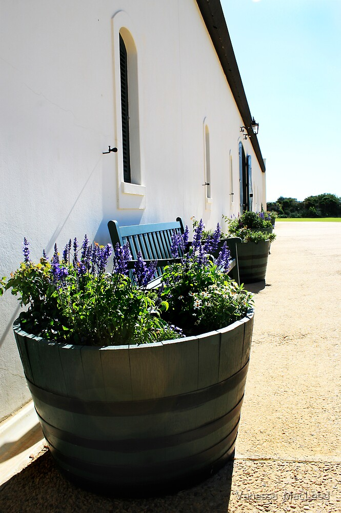 Lavender Barrel in Perspective by Vanessa  MacLeod