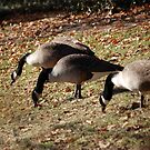 Dining Geese by Sarah McKoy
