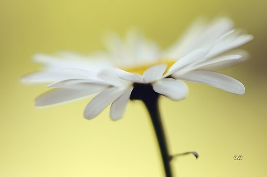 Fresh As A Daisy by Lois  Bryan