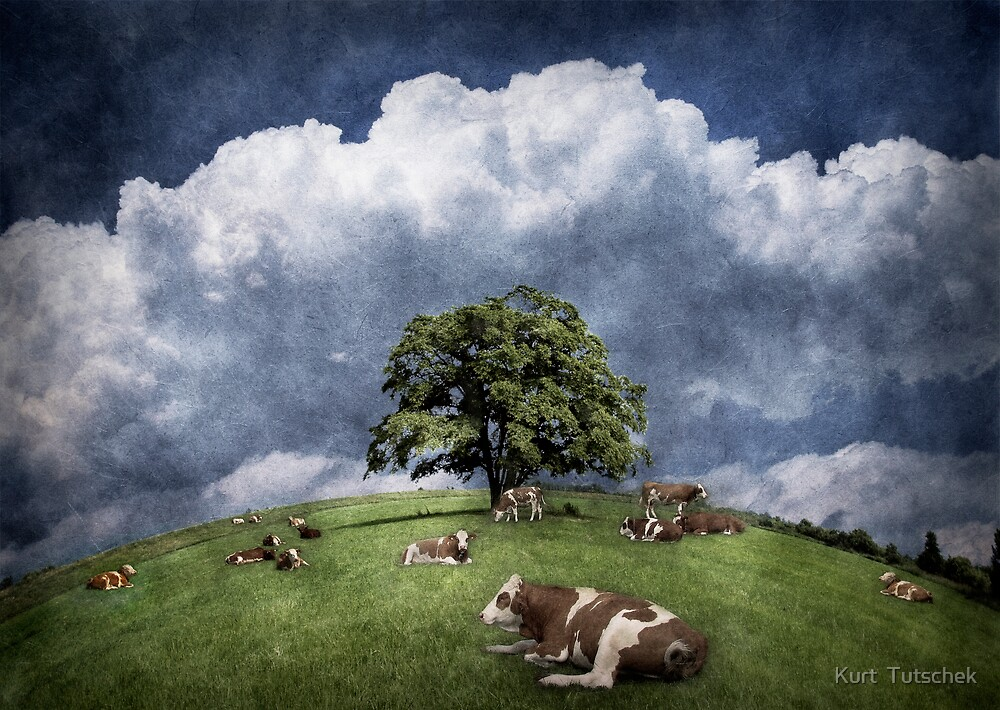 15 cows on the meadow by Kurt  Tutschek