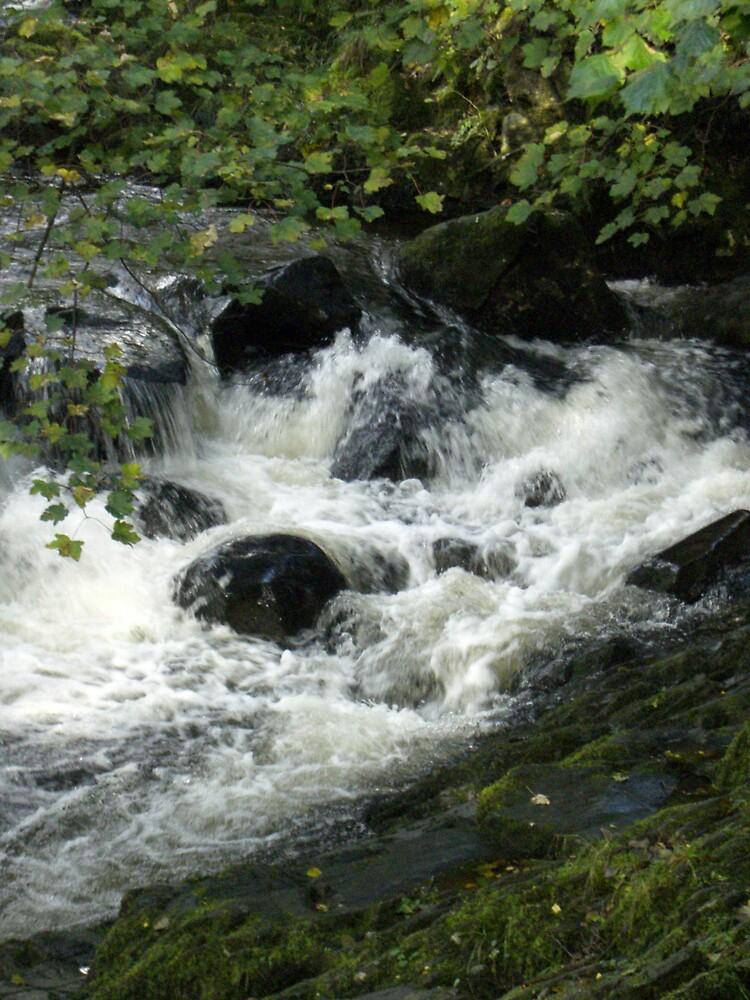 Serene Rapids  by Joy Williams
