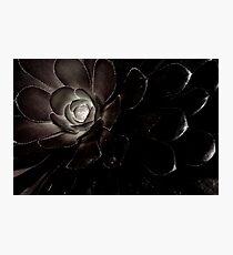 Aeonium Photographic Print