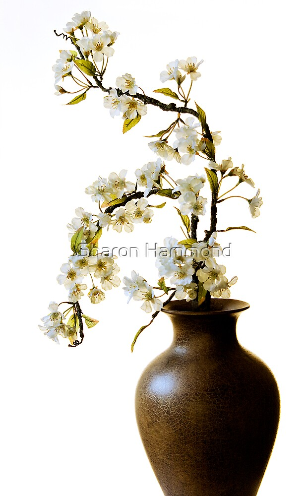 Blossom by Sharon Hammond