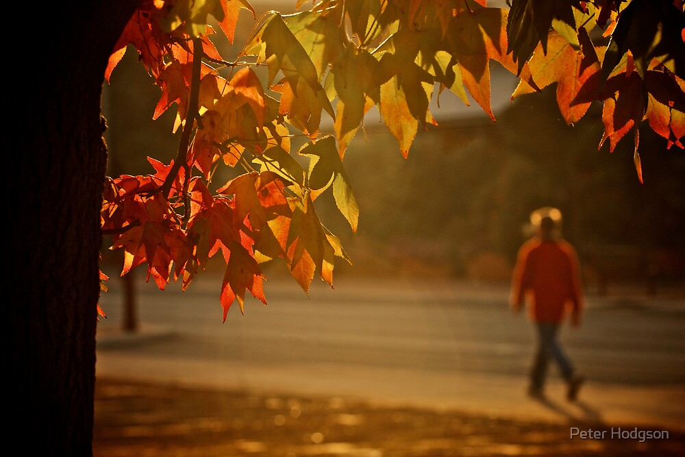 Morning Walk in autumn by Peter Hodgson