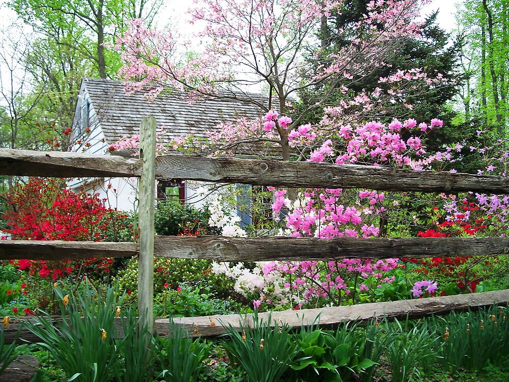 More colorful gardens and Elizabeth by Judi Taylor