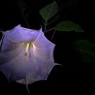 Moon Flower at Night by Otto Danby II
