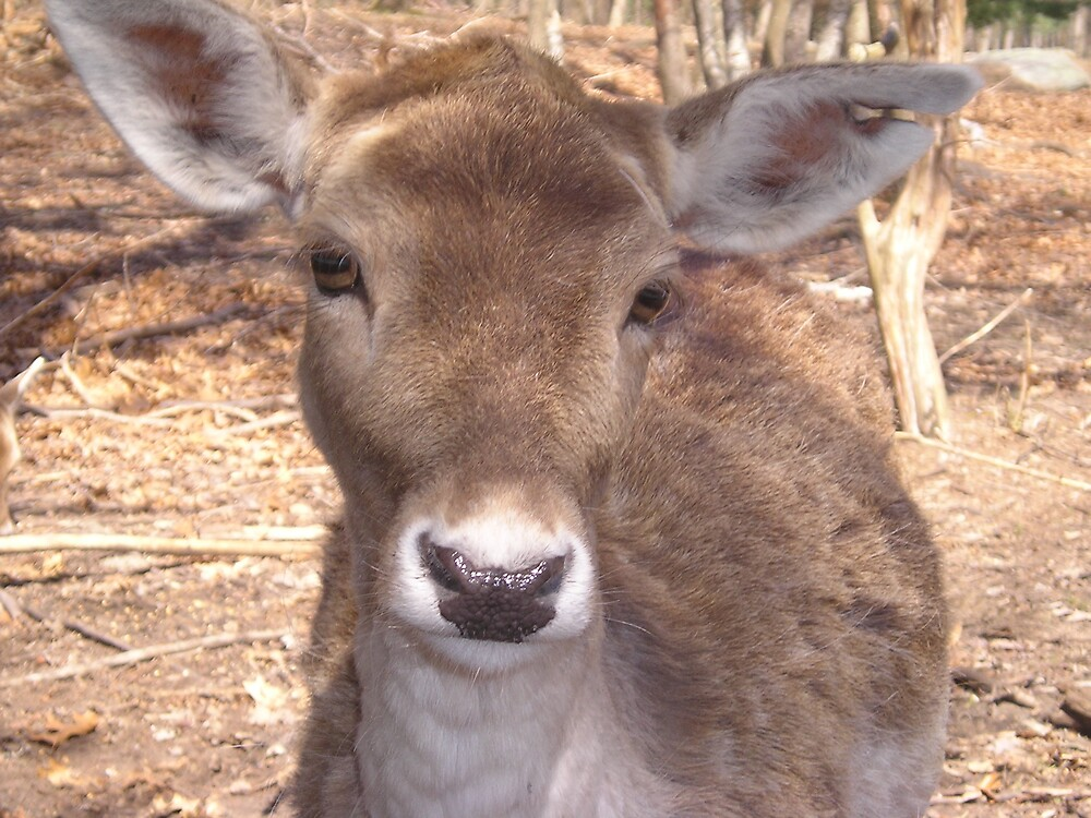 ~Precious Deer~ by Cindy Lemoi