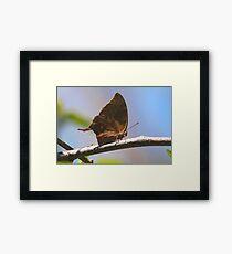 Cuban Butterfly Framed Print
