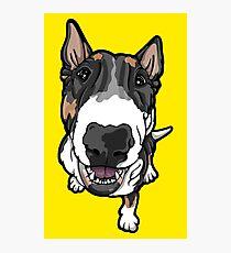 Happy Tricolor Bull Terrier  Photographic Print