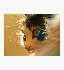 FURRY FELINE Photographic Print