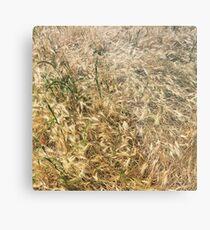 Wheat larger Metal Print