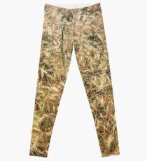 Wheat larger Leggings