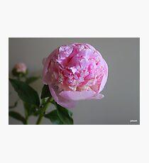 Peonie Photographic Print
