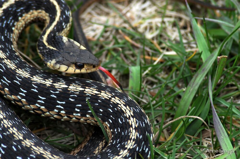 Garter Snake by Anne Smyth