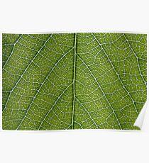 Leaf Veins Poster