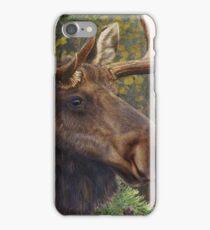 bull moose portrait amid aspen and spruce iPhone Case/Skin