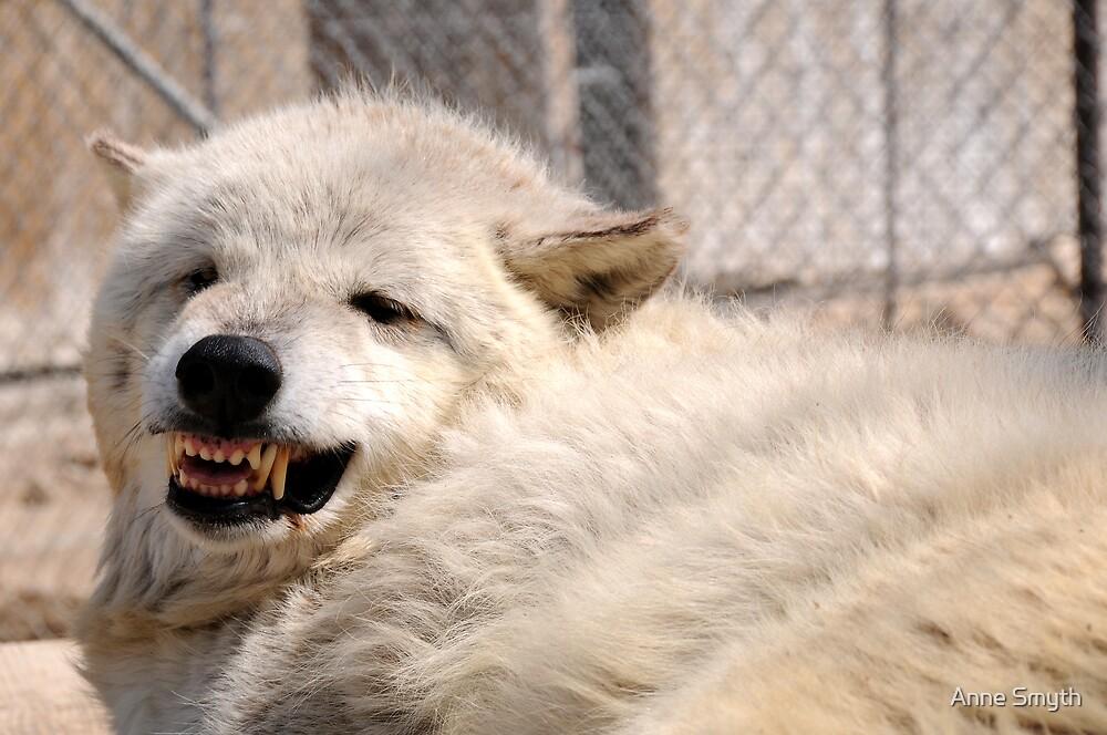 Wolf Teeth by Anne Smyth